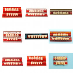 Protéza / Akrylové zuby