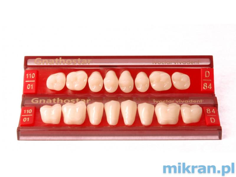 Propagace bočních zubů Gnathostar