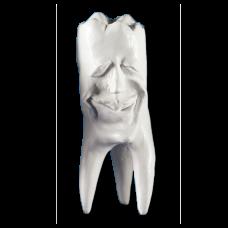 Sádrové zuby Hinrichsova sbírka zubů '' Ecki ''