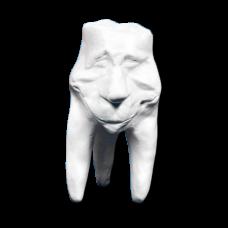 Sádrové zuby Hinrichsova sbírka zubů '' Clement ''