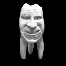 Sádrové zuby Hinrichsova sbírka zubů '' Joachim ''