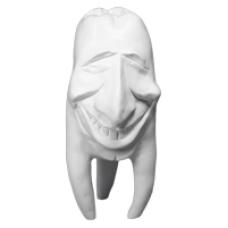 Sádrové zuby Hinrichsova kolekce zubů '' Tommy ''