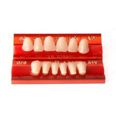 Přední zuby Major Super Lux 6 ks
