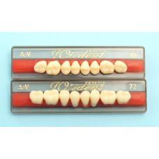 WIEDENT zadní zuby dle Vity 8ks