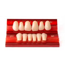 Přední zuby Dentex 6 ks